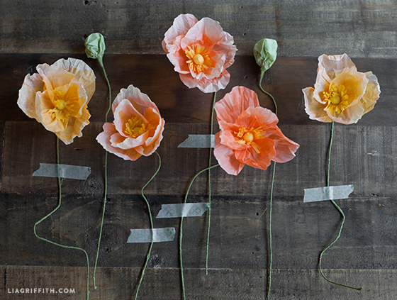 Tissue_Paper_Poppies
