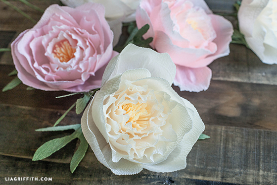Diy crepe paper peonies in cream blush colors lia griffith peonies crepepaperpeonytemplate crepe paper peony template mightylinksfo