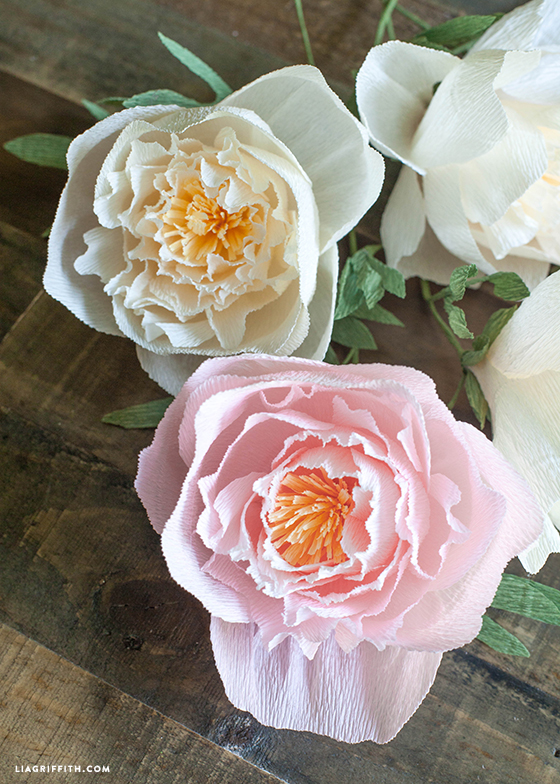 Diy Crepe Paper Peonies In Cream Blush Colors Lia Griffith