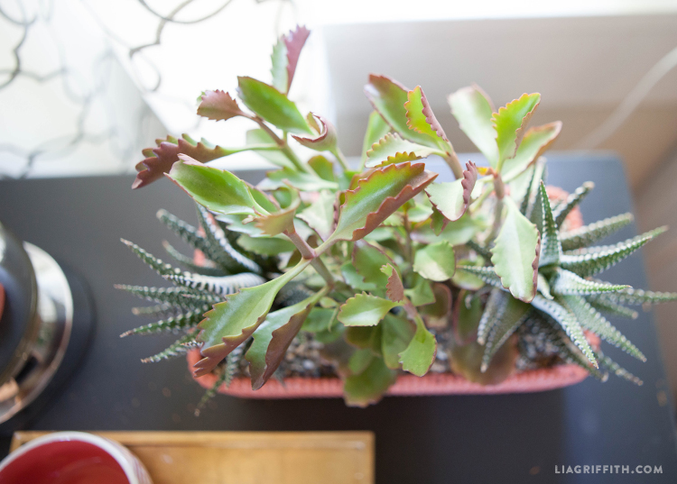Livingroom_Succulents