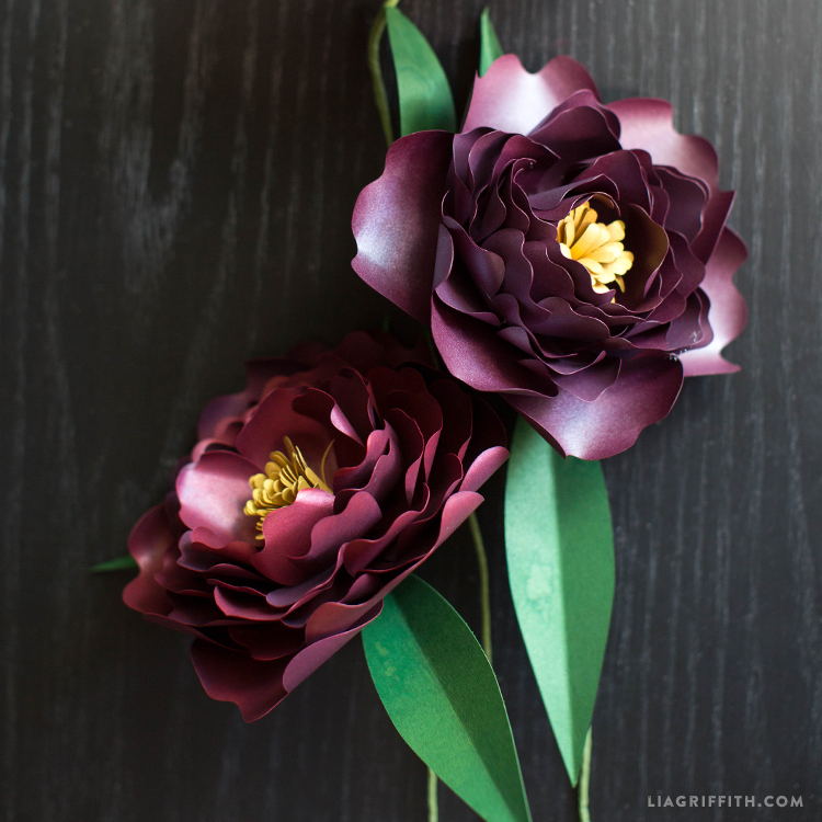 Paper peonies in plum lia griffith mightylinksfo