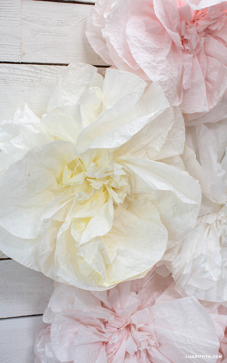 Coffee Filter Flower Backdrop Lia Griffith