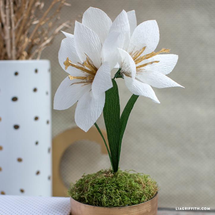 crepe paper amaryllis