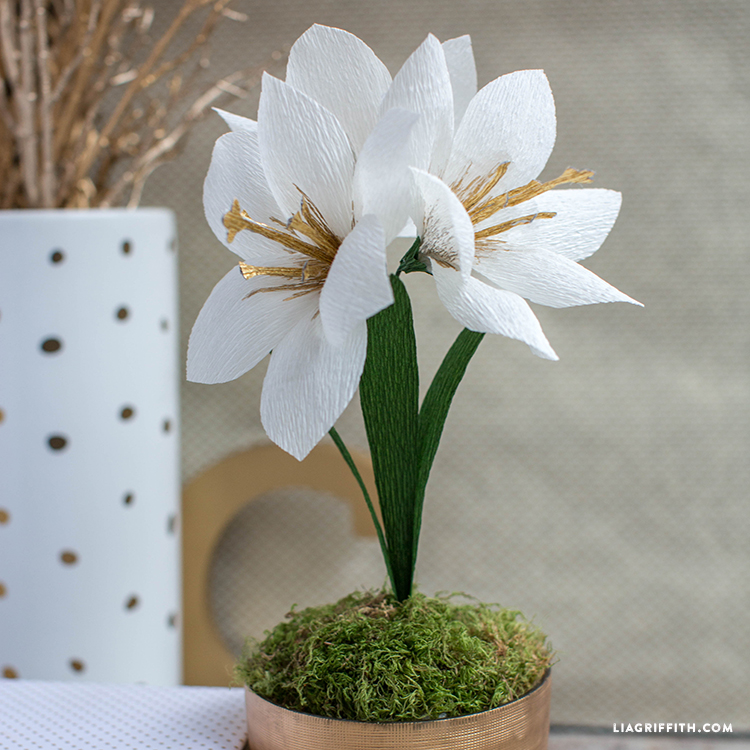 Diy crepe paper amaryllis lia griffith for Crepe paper wall flowers