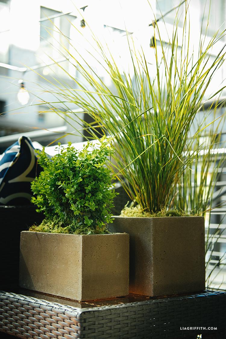 Wayfair_Concrete_Planters