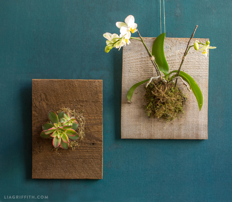 Mounted Orchids And Succulents Lia Griffith