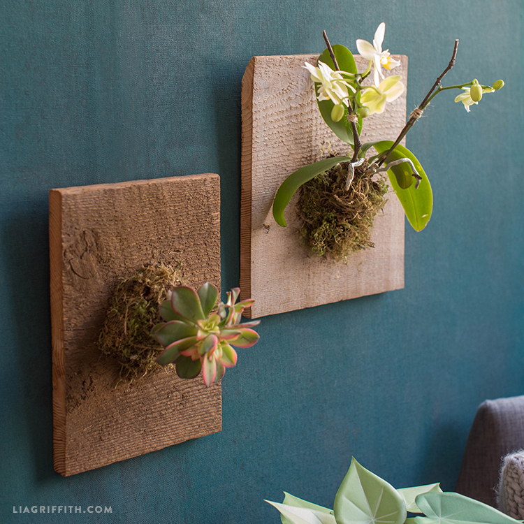 Mounted Orchids And Succulents