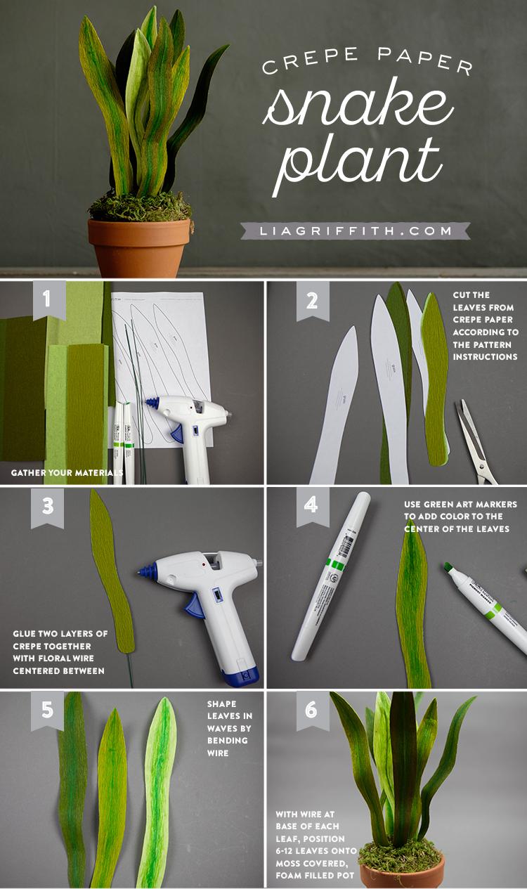 Snake_Plant_tutorial