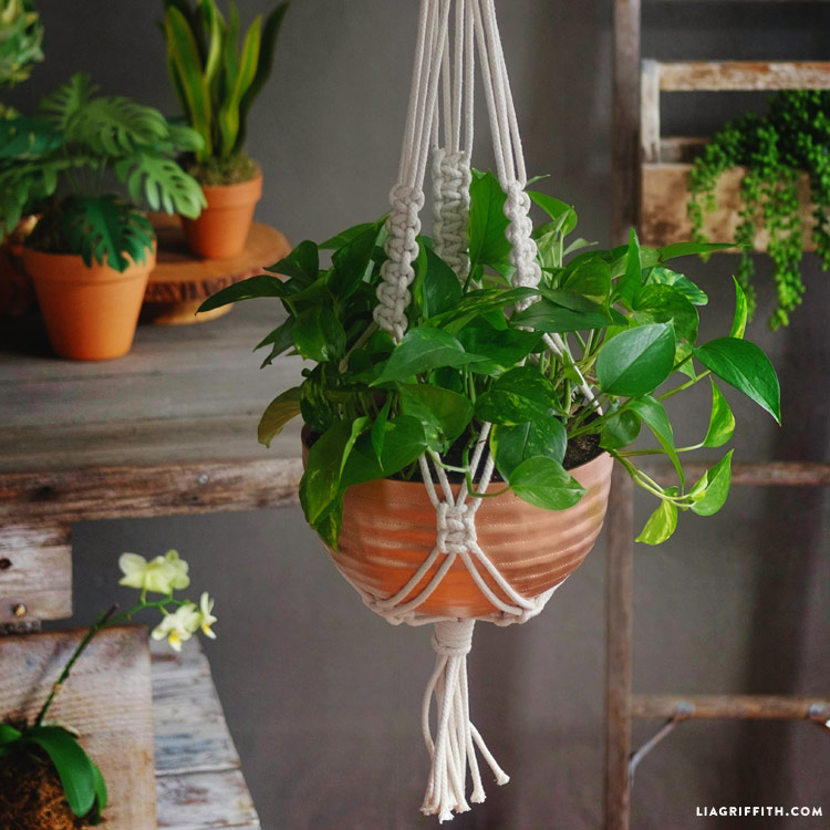 image relating to Free Printable Macrame Plant Hanger Patterns named Braided Macrame Plant Holder - Lia Griffith