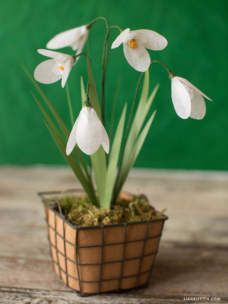 Paper Snowdrop Flowers