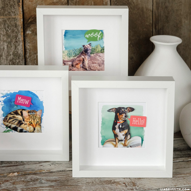 Homemade Pet Portraits