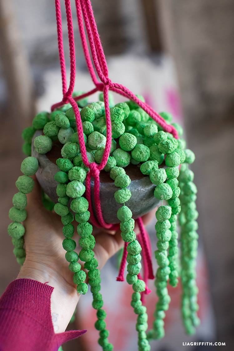 DIY String of Pearls Plant