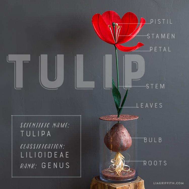 Giant Paper Tulip