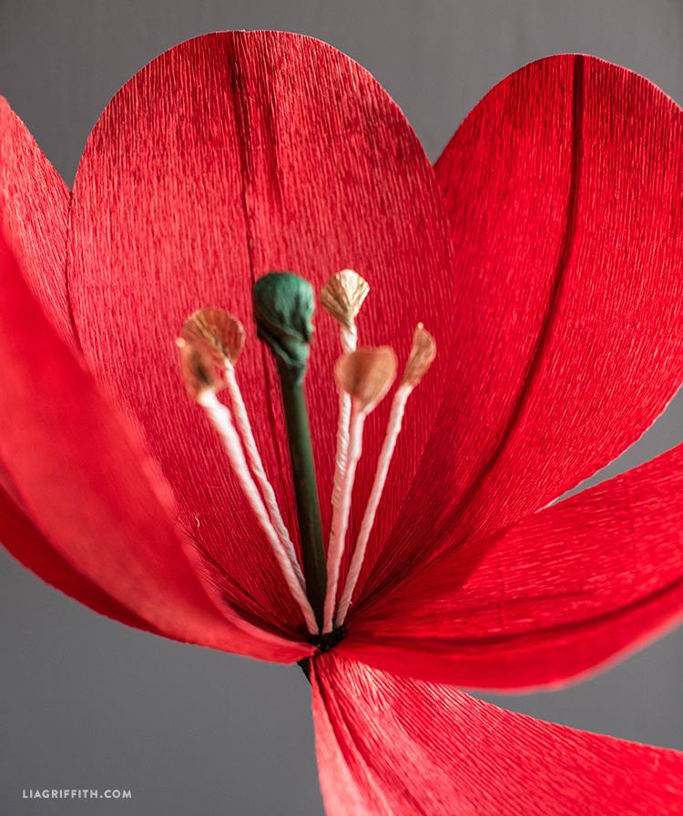 Jumbo Paper Tulip