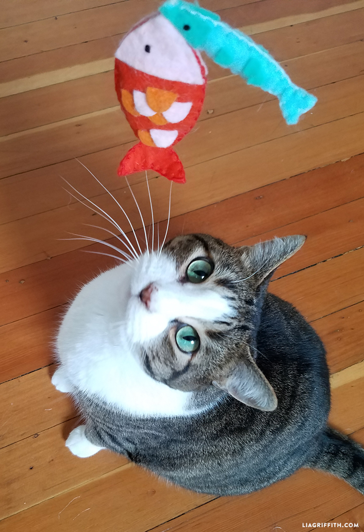 Make a diy fishing pole cat toy in 8 easy steps for Fish cat toy