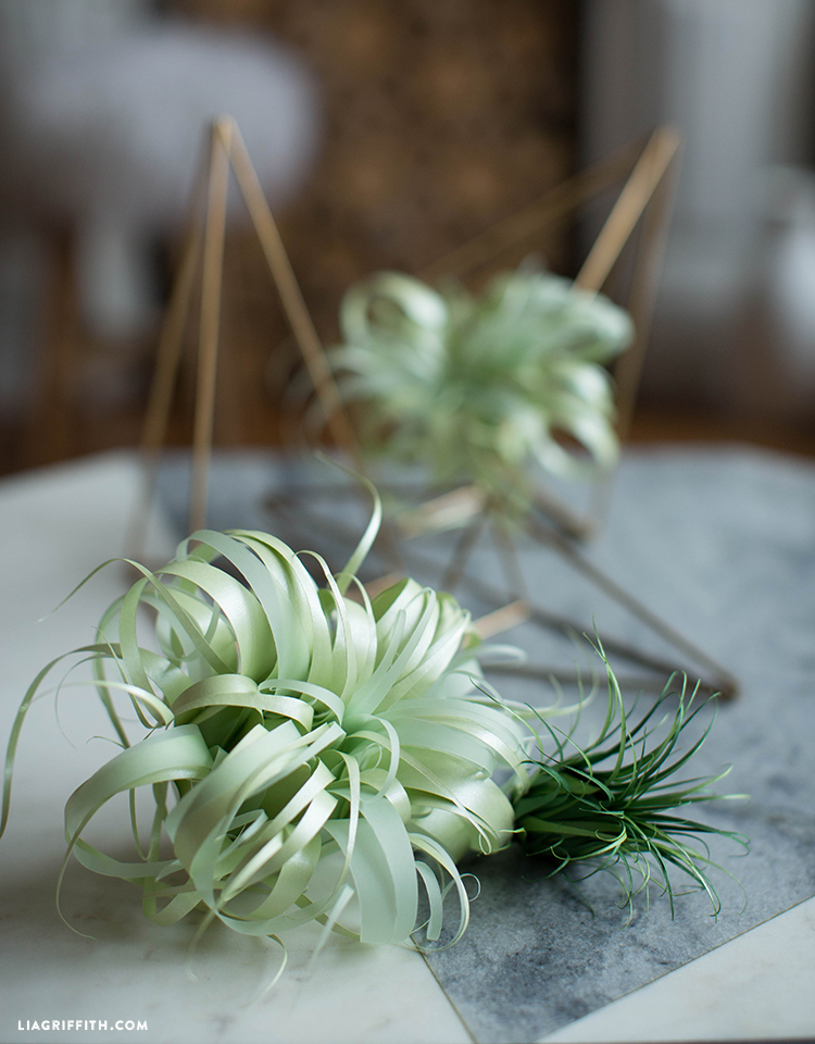 Vellum paper air plants lia griffith a botanical balancing act mightylinksfo