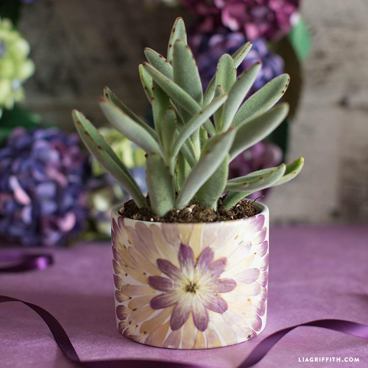 Pressed Flower Vase