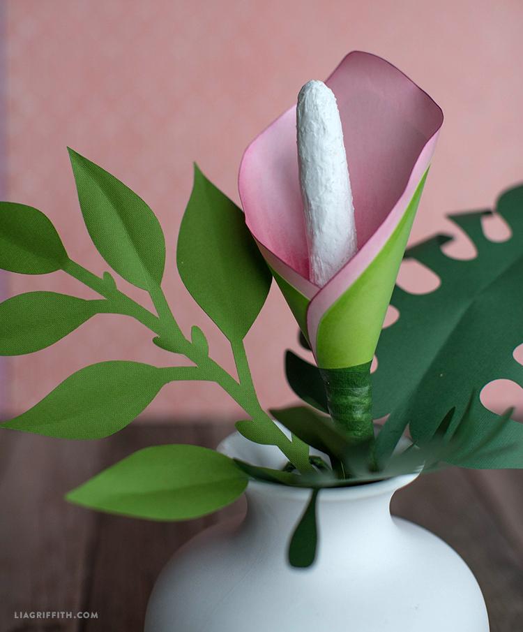 Split Leaf Philodendron Flower