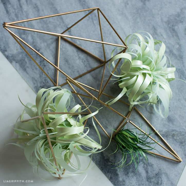 Vellum Paper Air Plants