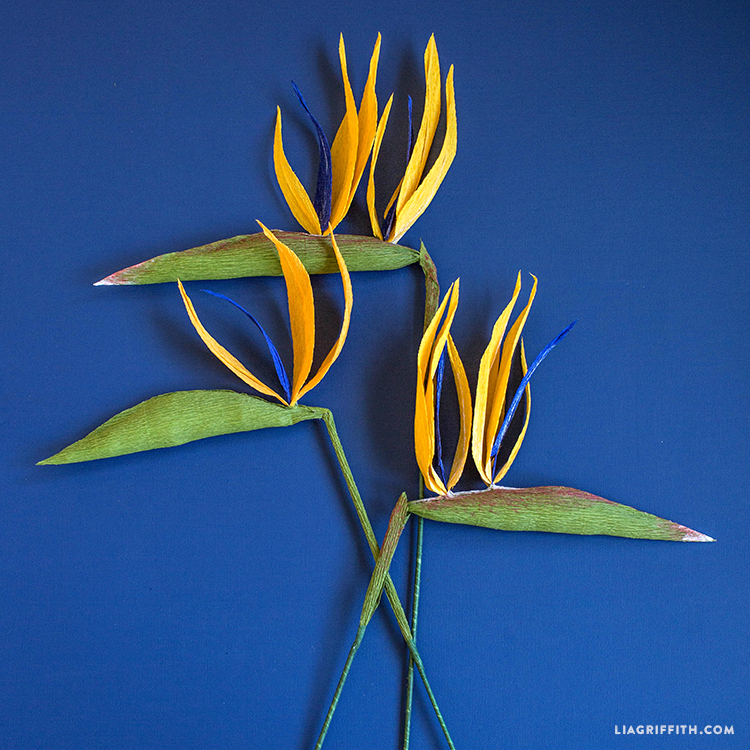 crepe paper birds of paradise