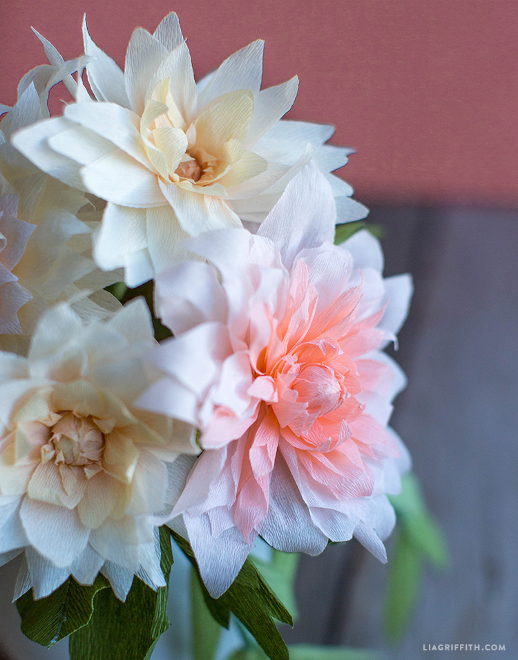 pink and white crepe paper dahlias