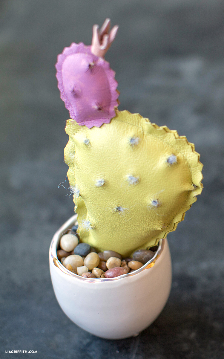 diy prickly pear