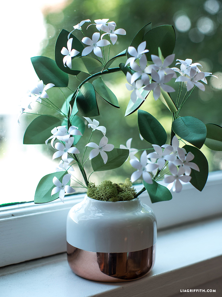 diy potted jasmine