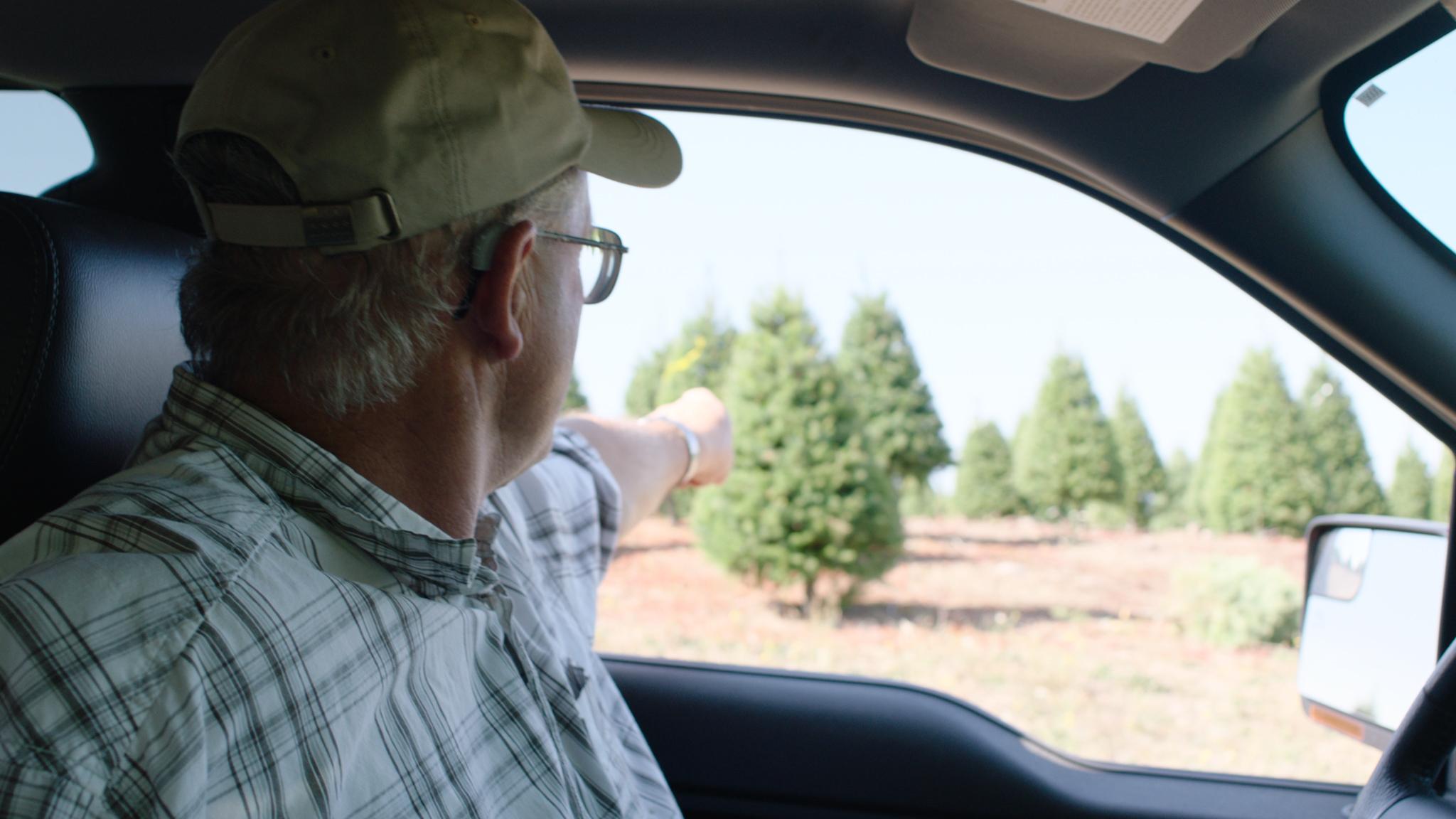klm trees keep it real