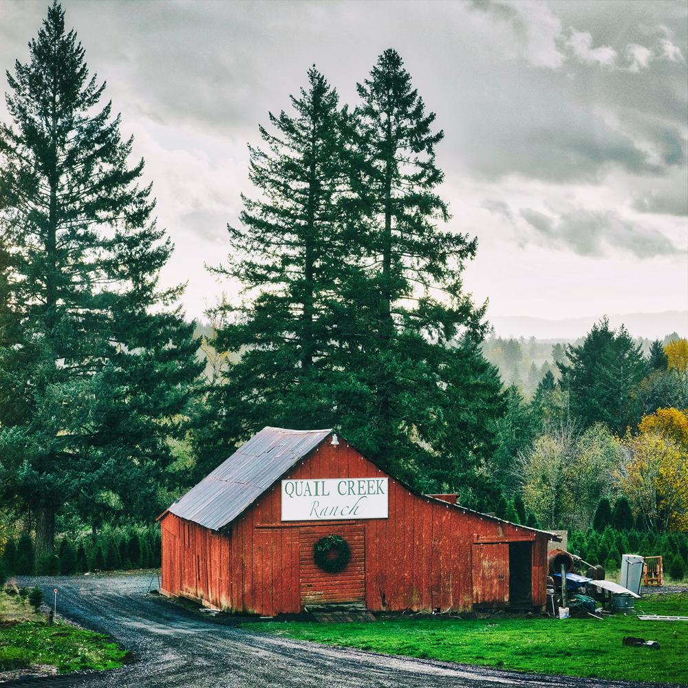quail creek ranch tree farm