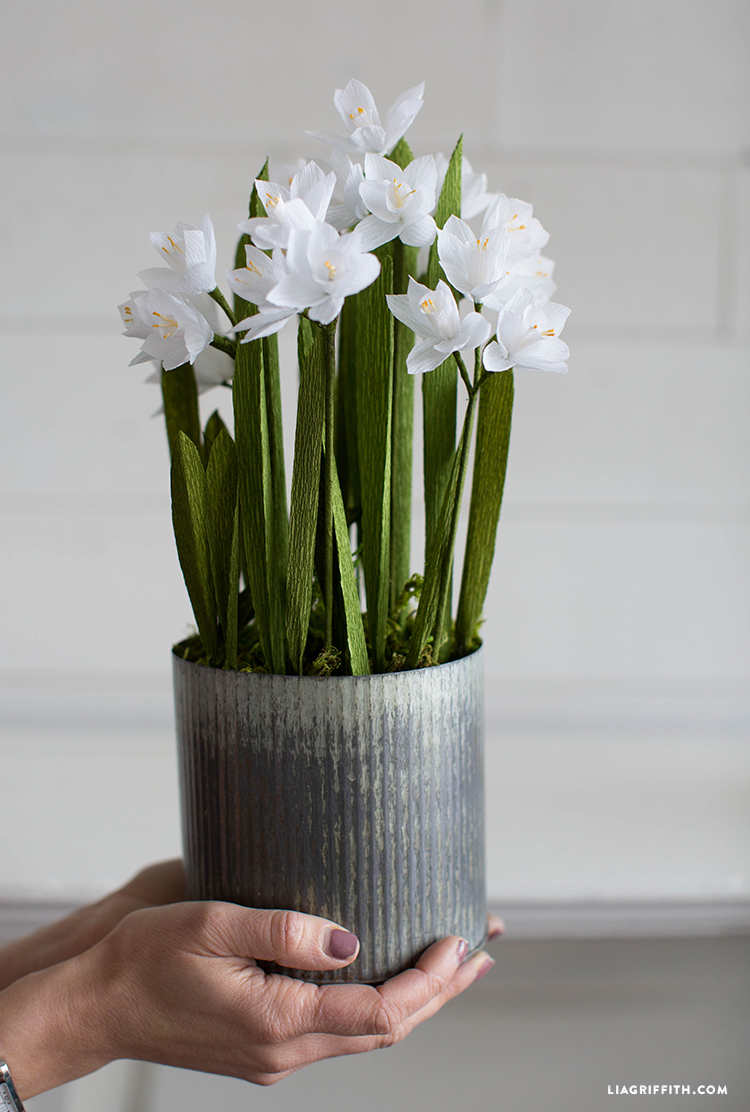 diy potted paperwhites