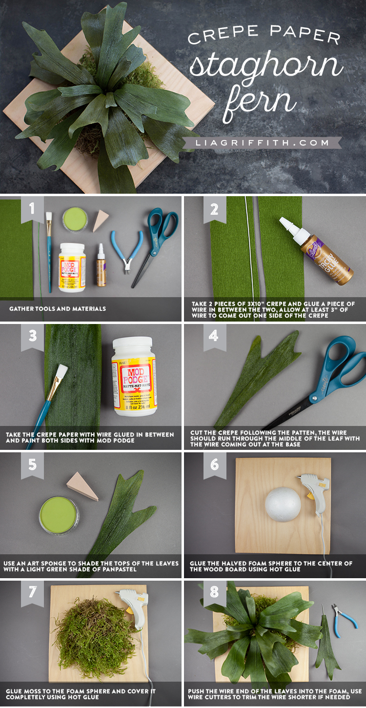 diy staghorn fern tutorial