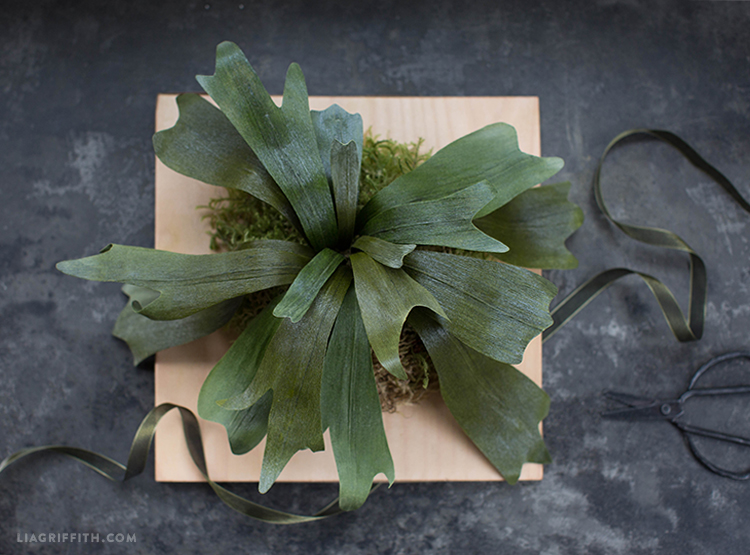 crepe paper staghorn fern