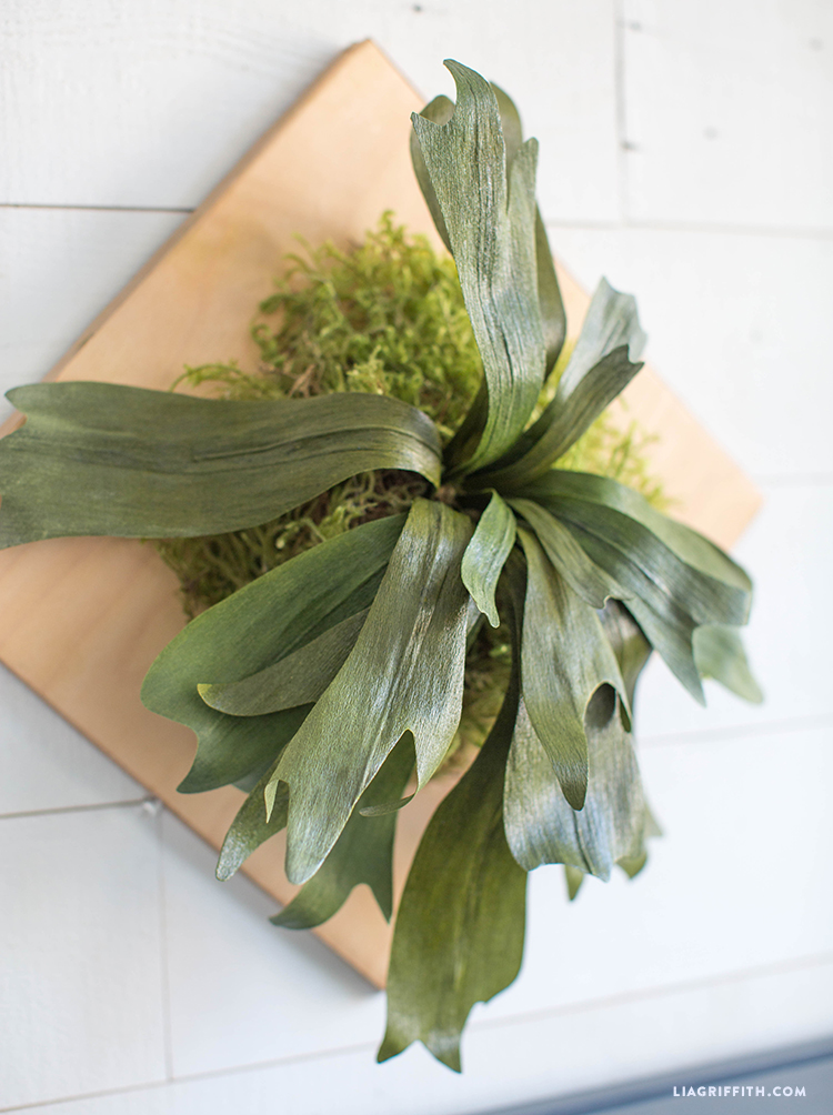 fake staghorn fern