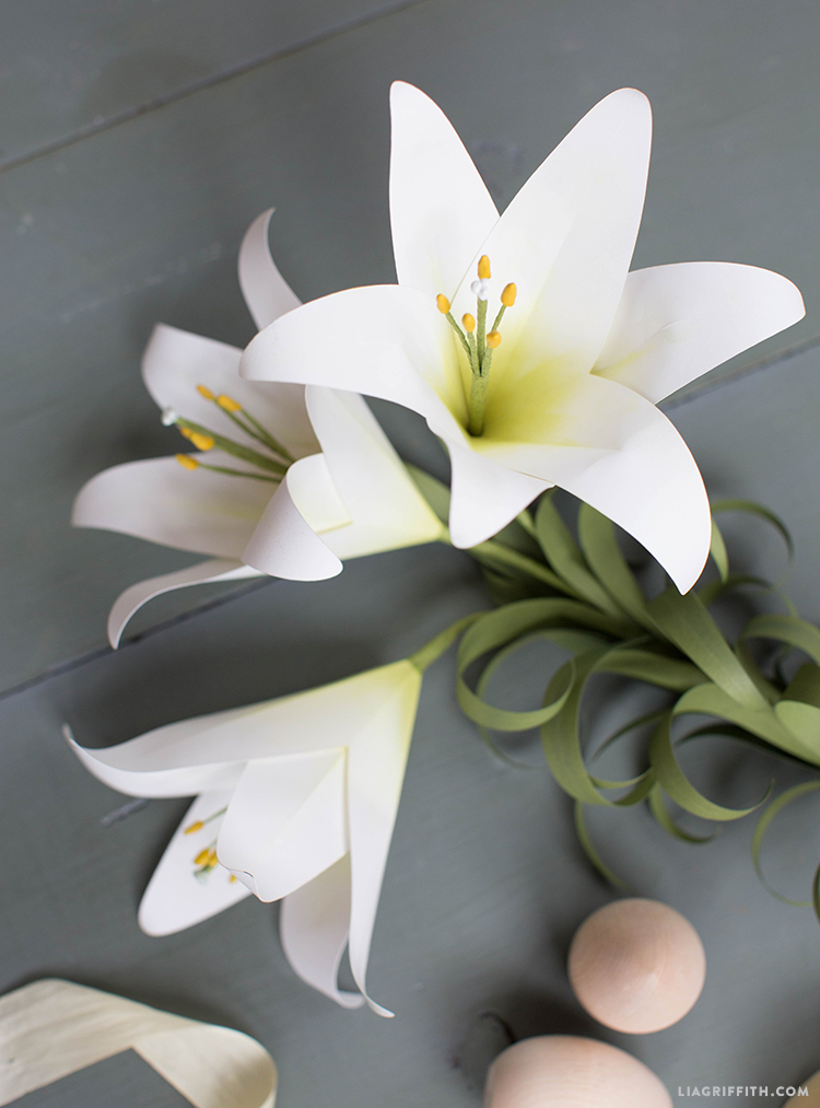 potted easter lily flower