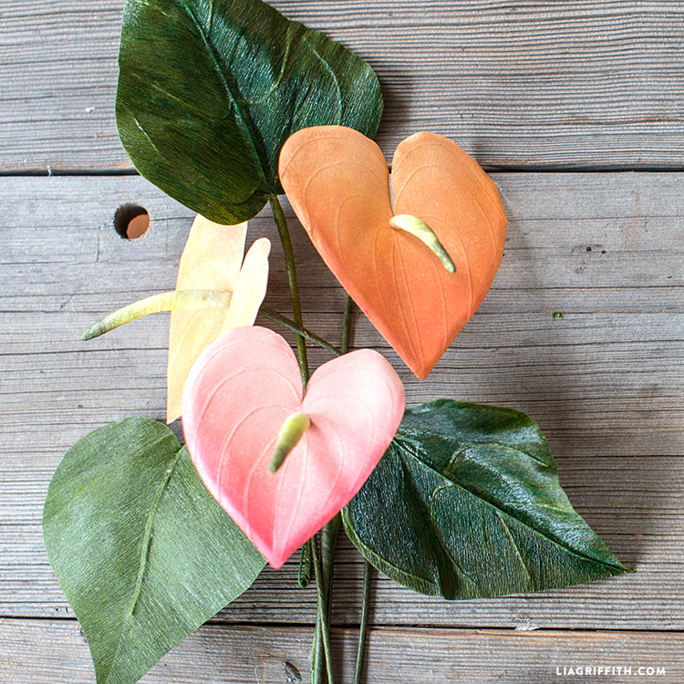 DIY anthurium