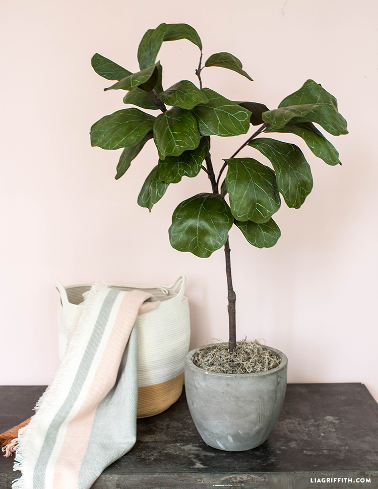 diy fiddle leaf fig tree