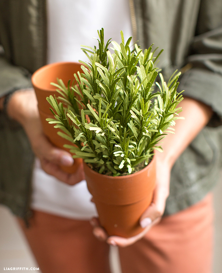 crepe paper rosemary plant