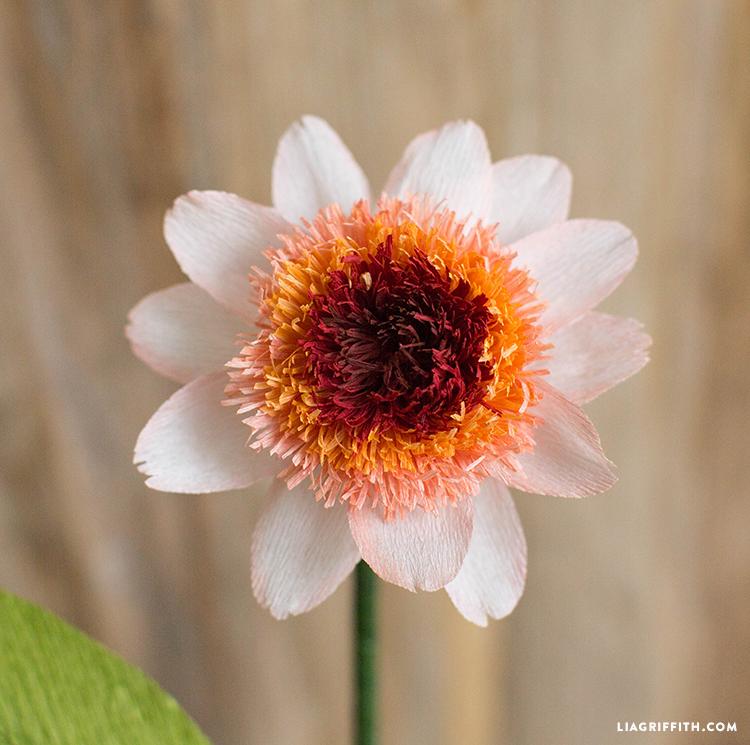 paper zinnia flower
