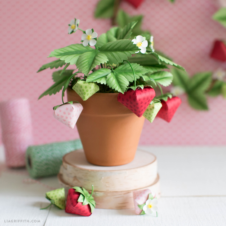 potted paper strawberry plant