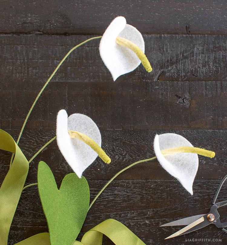 Anthurium Flower