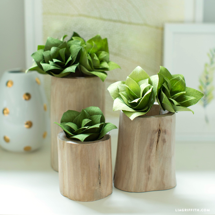 DIY Succulent Plants