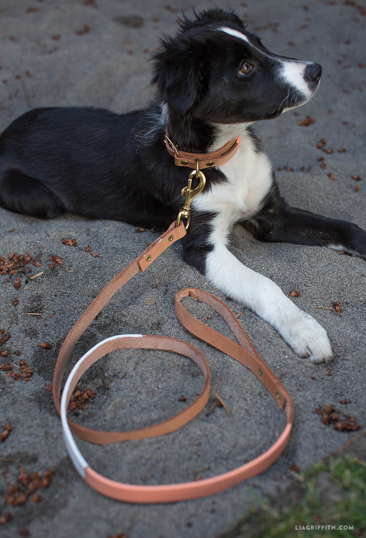 DIY Leather Dog Collar & Leash