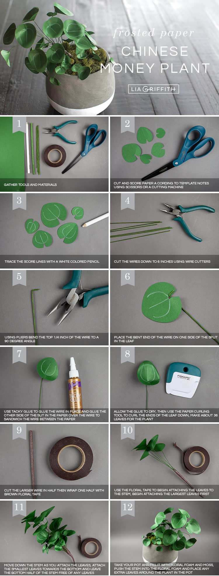 Photo tutorial for frosted paper Chinese money plant by Lia Griffith