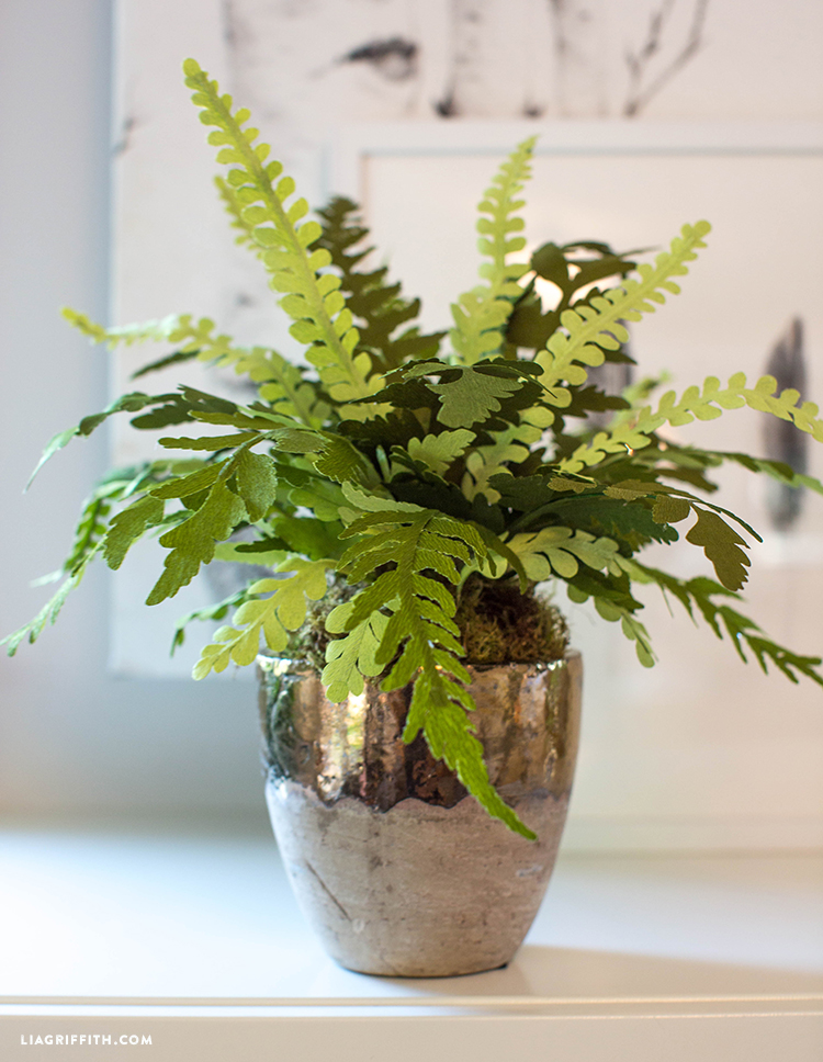 Close-up of double-sided paper fern in pot