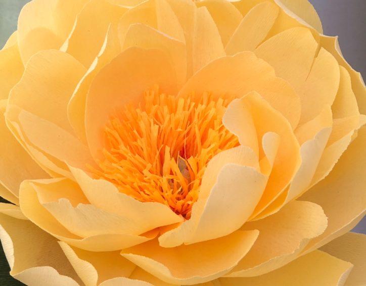 Yellow paper peony by Susan Bonn
