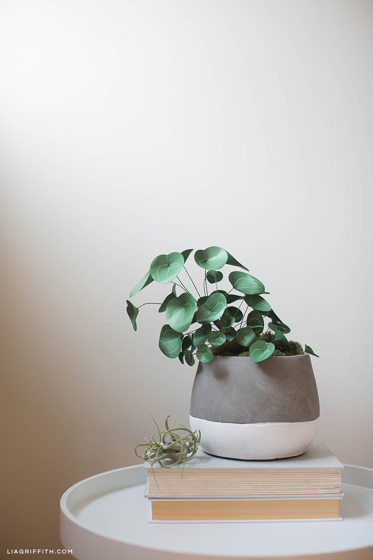Chinese money plant (Pilea) on two books on table