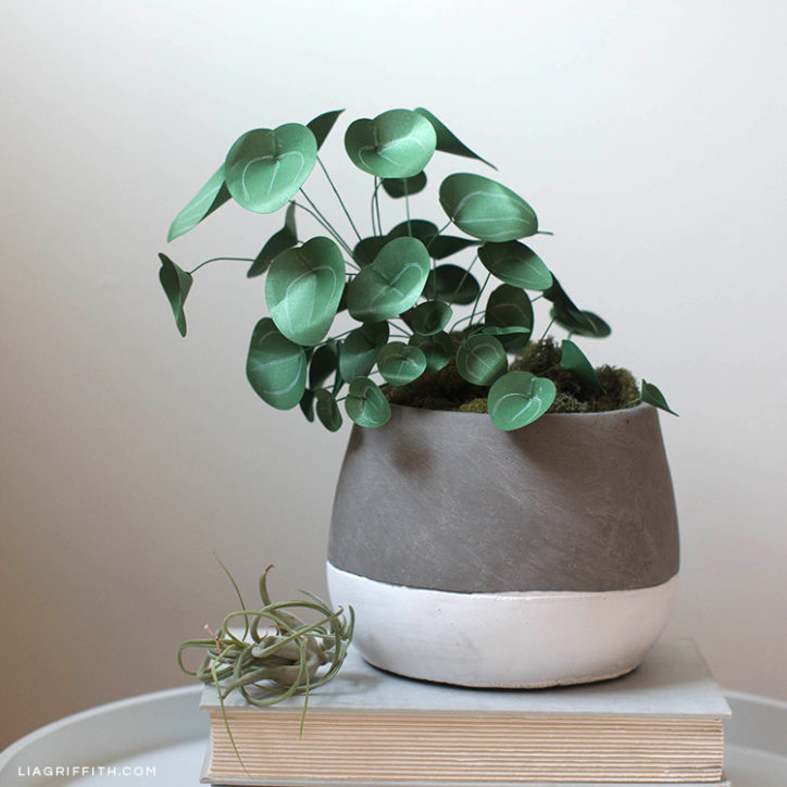 Chinese money plant in pot on book