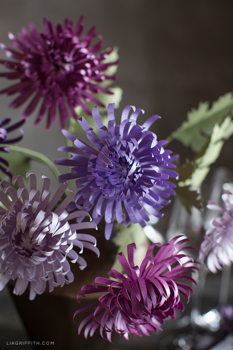 Purple paper spider chrysanthemums