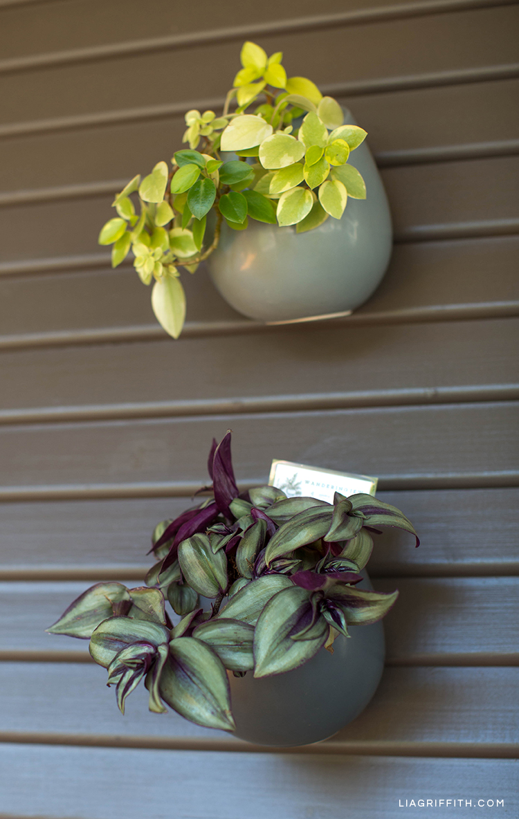 DIY plant markers in hanging planters