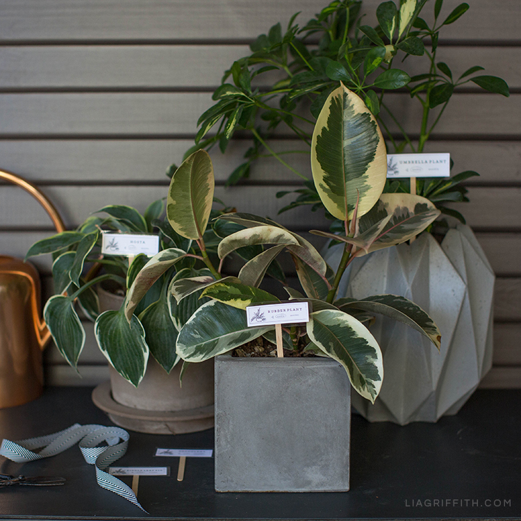 DIY plant markers in different planters
